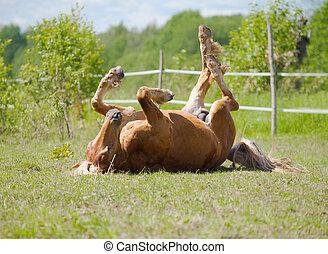 cavallo, rimbombante