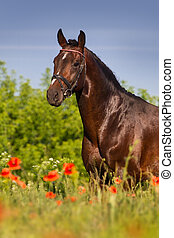 cavallo, ritratto, in, fiori