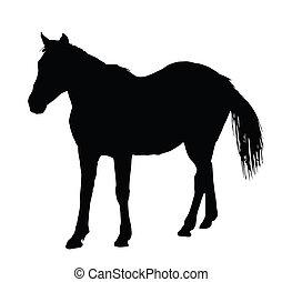 cavallo, ritratto, standing, grande, silhouette