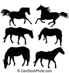cavallo, silhouette, collezione