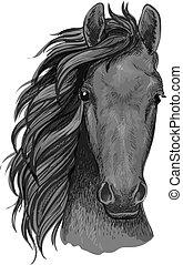 cavallo, stallone, testa, grigio, arabo, schizzo