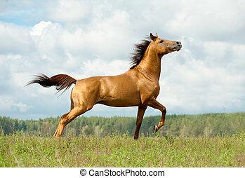 cavallo, su, libertà