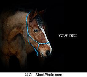 cavallo, su, nero