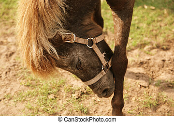 cavallo, suo, testa, ritratto, archeggio, lato