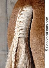 cavallo, treccia