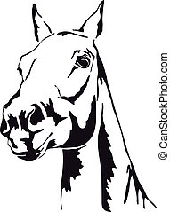 cavallo, vettore, nero, bianco, profili