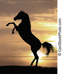 cavalo, árabe, garanhão
