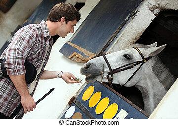 cavalo, alimentação, homem