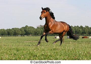 cavalo, baía
