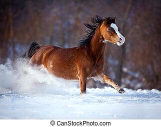 cavalo, baía, inverno, gallops
