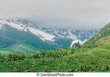 cavalo branco, em, montanhas altas