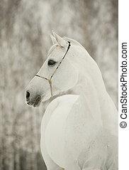 cavalo branco, inverno