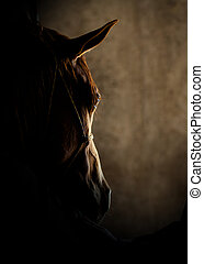 cavalo, cabeça, detalhe