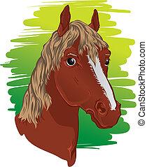 cavalo, cabeça