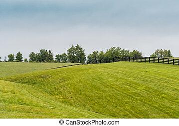 cavalo, cerca, ligado, colinas rolantes, em, kentucky