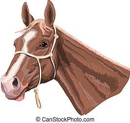 cavalo, com, cabresto