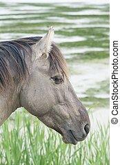 cavalo, em, a, abertos, campo