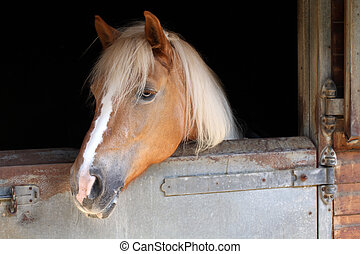 cavalo, em, a, estável
