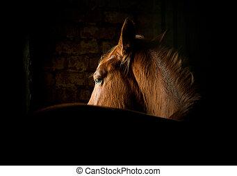 cavalo, em, escuro