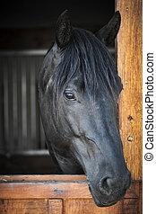 cavalo, em, estável