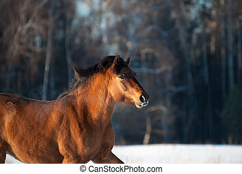 cavalo, em, inverno