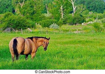 cavalo, em, pasto verde