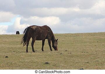 cavalo, em, rolando, prado