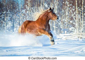 cavalo, esboço, inverno, gallops