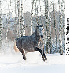 cavalo, inverno