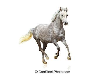 cavalo, isolado