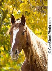 cavalo, ligado, amarela