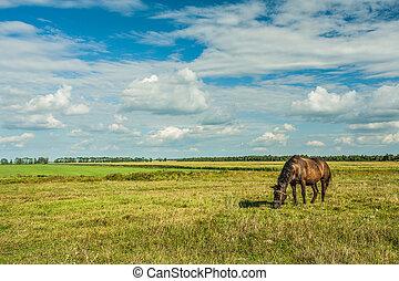 cavalo, ligado, campo, rural, vista