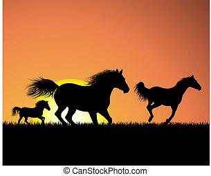 cavalo, ligado, pôr do sol, fundo