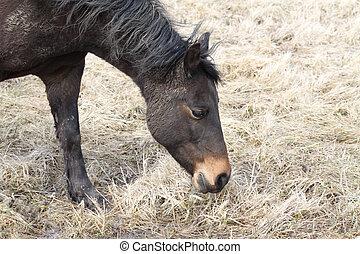 cavalo, marrom