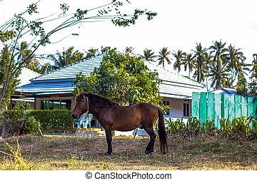 cavalo marrom, capim, pastar