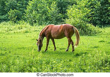 cavalo marrom, erva, pastos, pasto verde