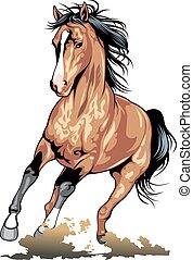 cavalo marrom, isolado