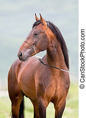 cavalo marrom, retrato, ficar