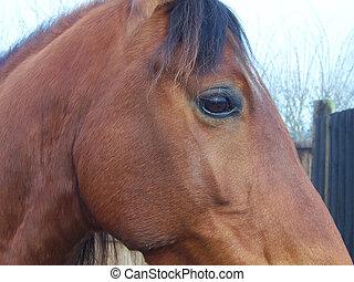 cavalo, olho