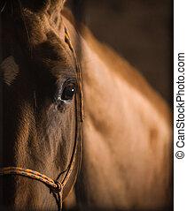 cavalo, olho, sem conhecimento