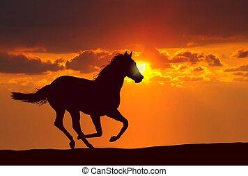 cavalo, pôr do sol, executando
