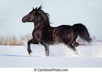 cavalo preto, corrida, inverno
