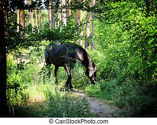 cavalo, raça, baía, escuro, madeiras, pastar