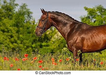 cavalo, retrato, em, flores