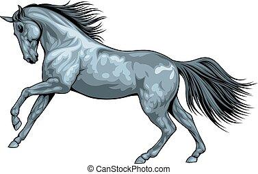 cavalo selvagem, pretas