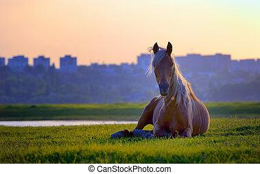 cavalo, sentando, em, pôr do sol