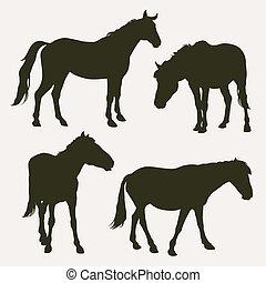 cavalo, silhuetas