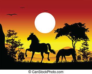 cavalo, silueta, beleza