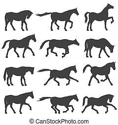 cavalo, silueta, set.
