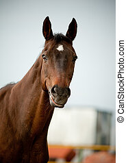 cavalo, sorrizo